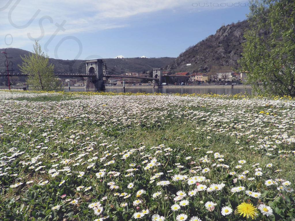 photographie prise le long de l'EuroVelo 17 près de Andancette