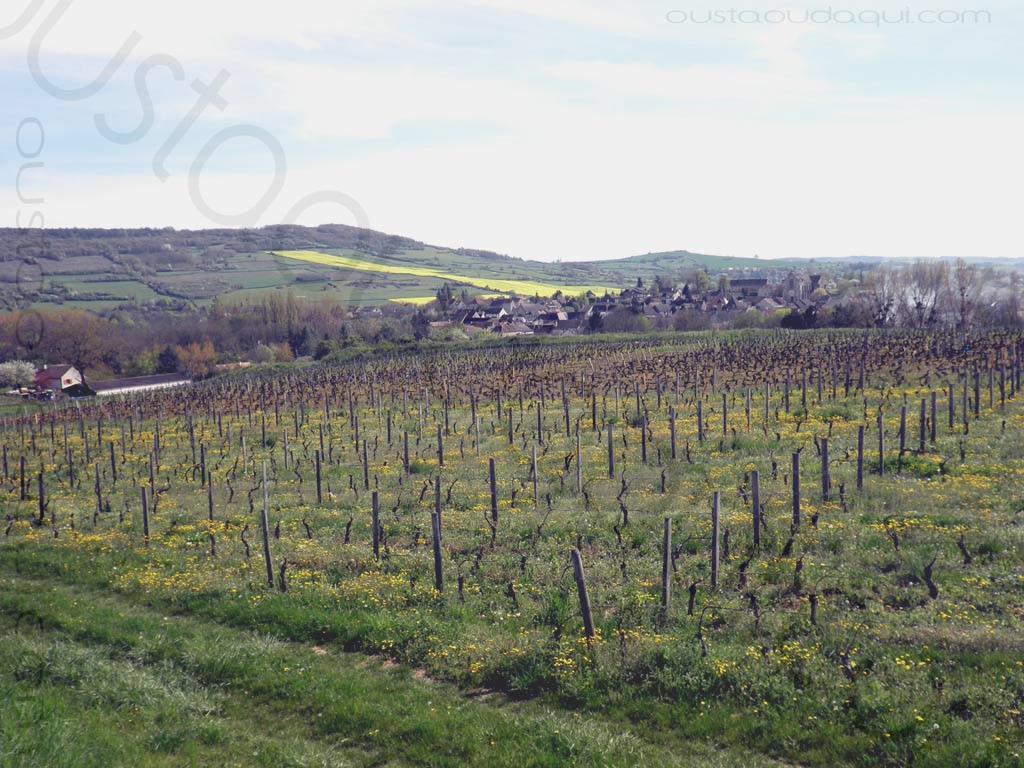 picture taken along the EuroVelo 6 near Cheilly-lès-Maranges